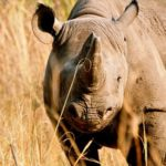 Beautiful Rhino Imire