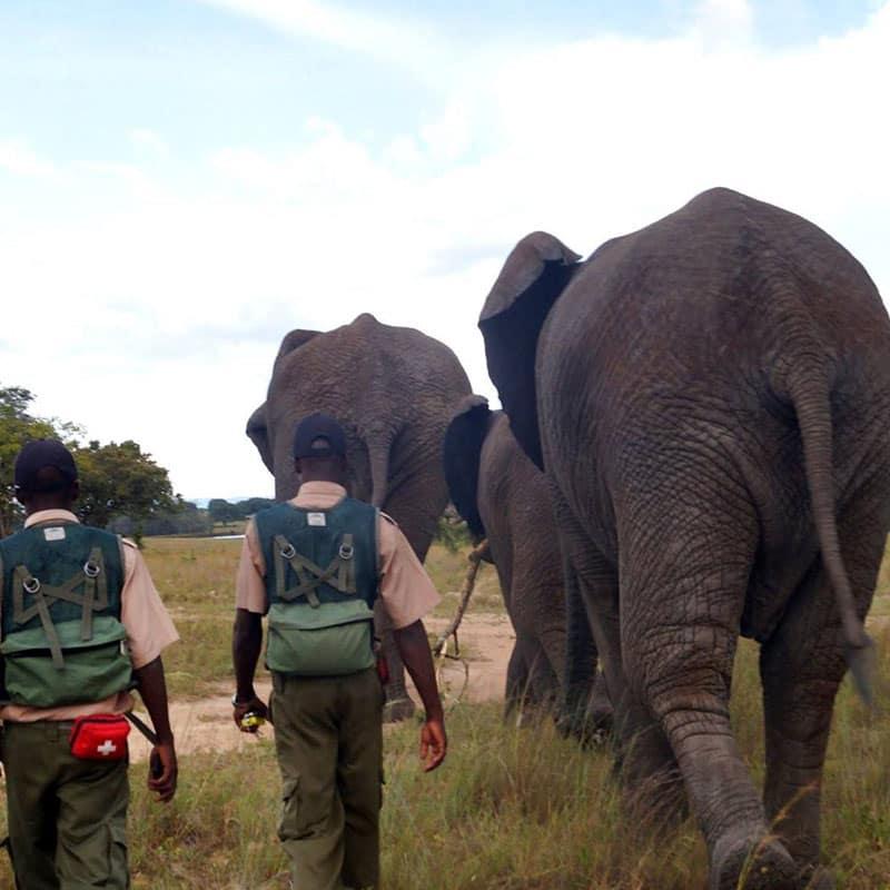 Imire Elephant Handlers