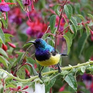 Imire birding
