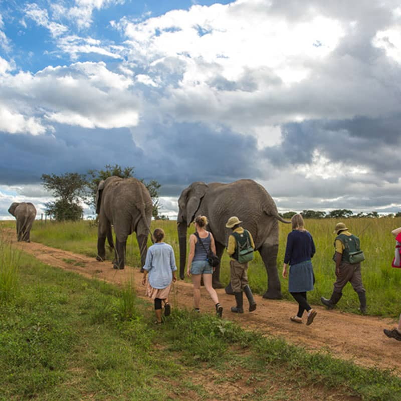 Imire Day Trips Elephant Encounter