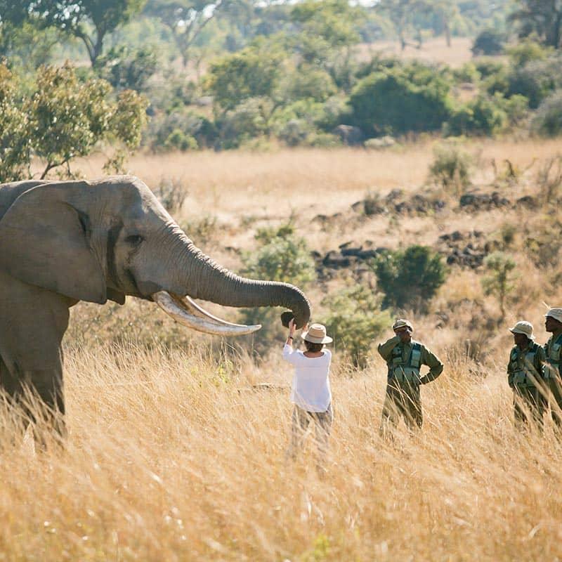 Imire Day Trips Elephant Trip