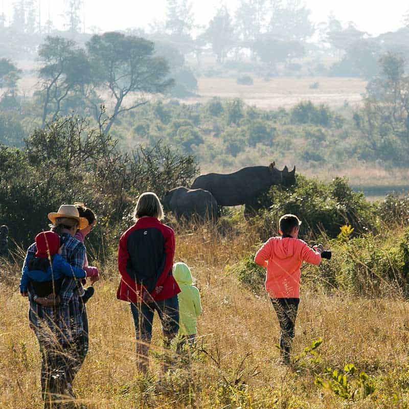 Imire Day Trips Rhino
