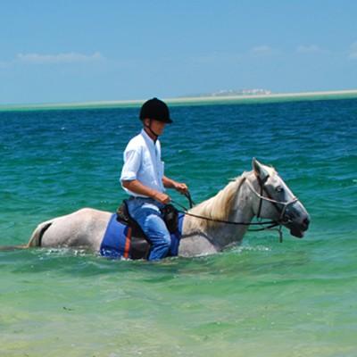 MOZ HORSE INTERNSHIP 7