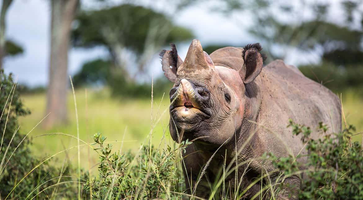VOLUNTEER IN AFRICA IMIRE RHINO