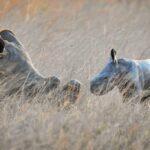 Baby White Rhino Imire Rhino and Wildlife Conservation
