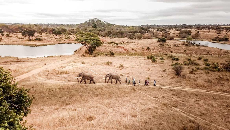 Elephants Imire Game Reserve