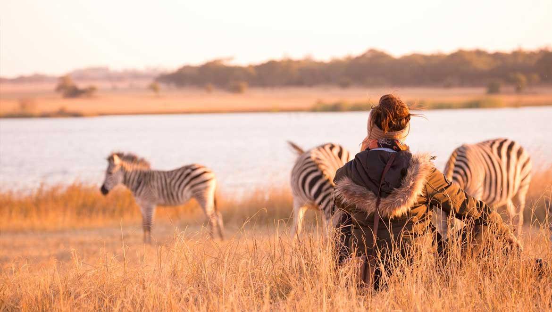 Zebras Imire Game Reserve