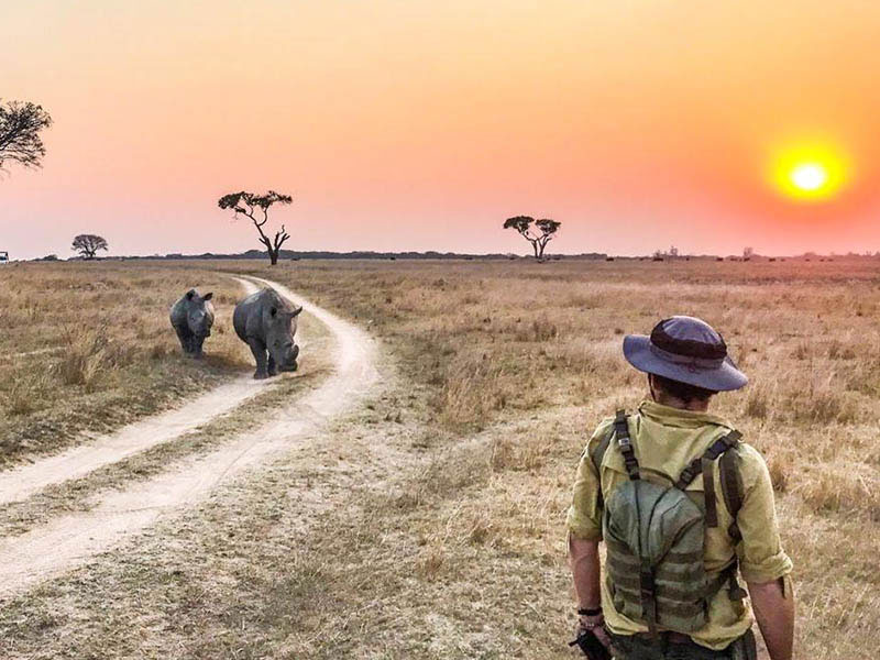 FGASA endorsed wildlife training