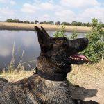 Anti-Poaching Dog Murwi