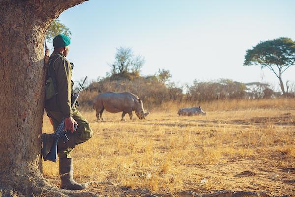 Rhino and guard
