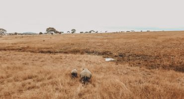 Rhino and baby rhino